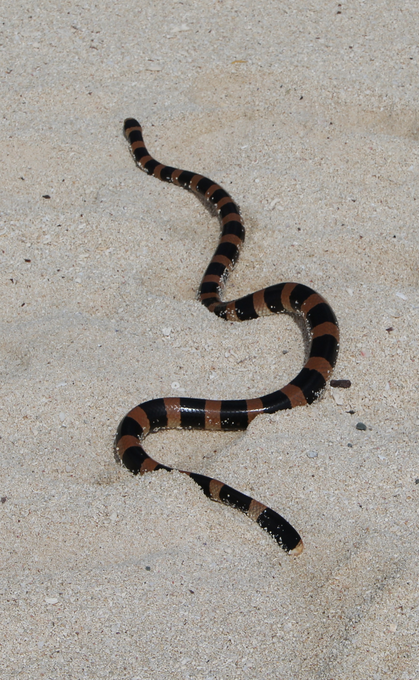 snake - photo #16