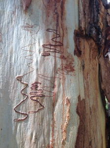 Nature's hieroglyphics