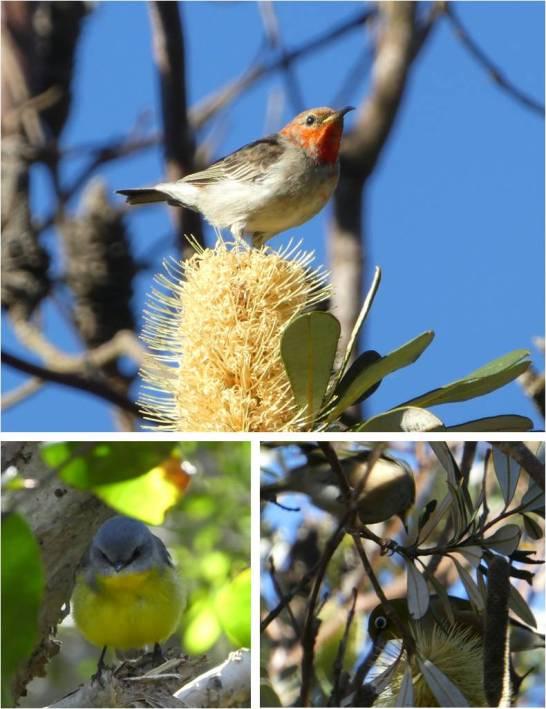 Birds montage 1