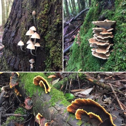 Fungi © Louise Creely